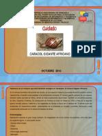 Diapositiva Caracol Africano
