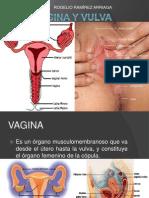 Vagina y Vulva