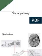 Visual pathway.ppt