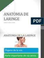 ANATOMIA LARINGE.pptx