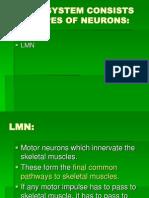 UMN& LMN