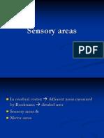 Sensory Areas