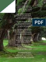 Árvore - Poema