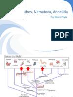 BIO1 - Platyhelminthes, Nematoda, Annelida