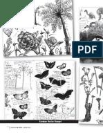 Biomimetica Que Es (Ilustraciones)
