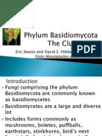 Phylum Basidiomycota