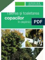 Taierea-copacilor File 27