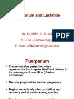 Puerperium and Lactation-By:Dr.DHIREN BHOI