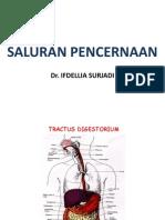 histologi-saluran-pencernaanvfdf