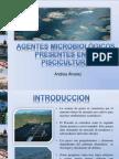 AGENTES MICROBIOLÓGICOS PRESENTES EN LA PISCICULTURA