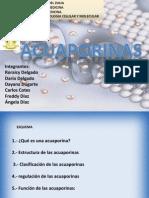 acuaporinas1-090529224339-phpapp02