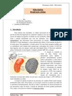 respiraocelular-110318132841-phpapp01.pdf