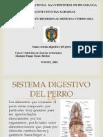 Sistema Digestivo Del Perro