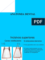 0clusion Anatomia CORRECTA