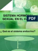 Sistema sexual hormonal en el varón V