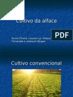 Cultivo Do Alface (Pronto)