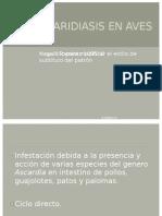 Ascaridiasis en Aves