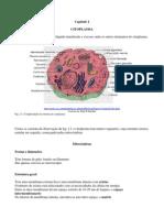 FisioCelCap02_CITOPLASMA