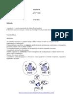 FisioCelCap05_APOPTOSE