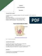 FisioEndoCap05_PARATIROIDEIAS