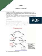 Fisiomusccap03 Energetica Muscular