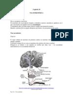 Fisioorgsencap24 via Somestesica