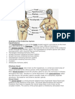 Anatomy of the Endocrine System