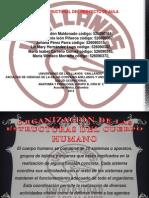 organización de las estructuras del cuerpo humano