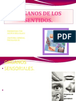 organossensorialesdiapositivas-090907072847-phpapp02