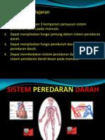 76593769 Sistem Peredaran Darah Ppt