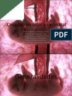 Circulacion sanguinea intrauterina y neonatal de los animales
