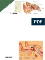 anatomiTHT