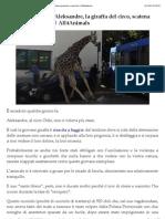 L'ingiusta morte di Aleksandre, la giraffa del circo, scatena proteste e ipocrisie