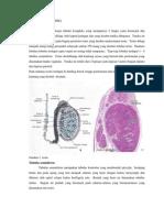 Histologi Reproduksi Pria