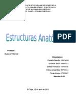 Estructura Anatómica del Bovino