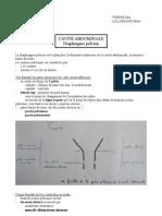 Diaphragm Pelvien