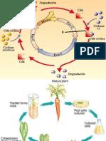 Regulacion Ciclo Celular y Clonacion