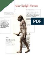 master homo erectus detailed input 2
