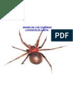 ARAÑS DE LOS CUADROS 1.ppt