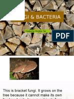 Fungi Bacteria