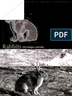 Rabbit Strategy