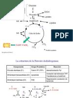 bioq_2_t3_ciclokrebs