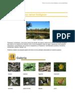 los reinos.pdf