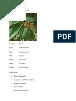 Polyanthi Folium