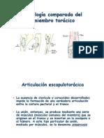 Modulo2 - Artrología comparada del miembro torácico