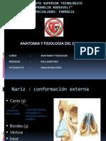 Anatoma fisiologa olfato