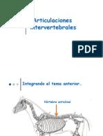 Modulo 1 - Articulaciones Intervertebrales