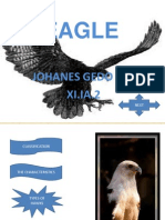 About Eagle