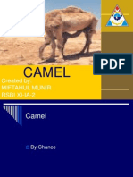 About Camel