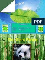 About Panda